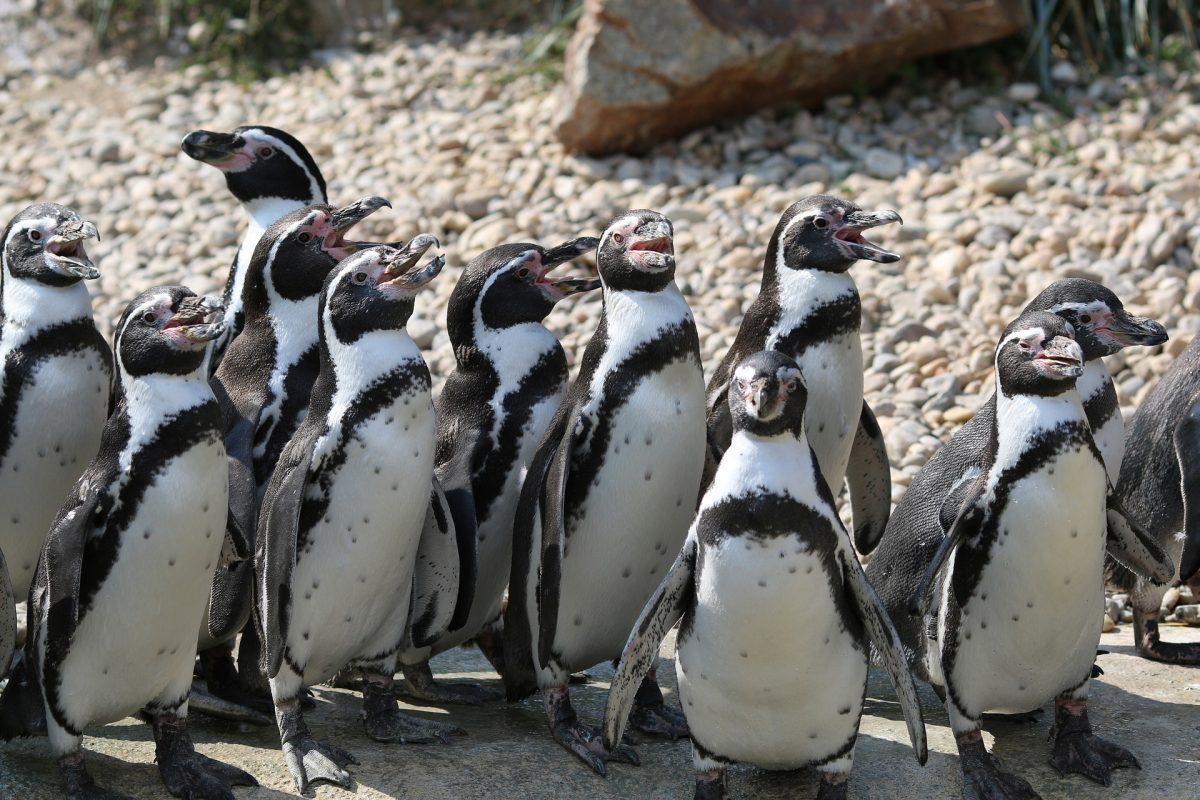 Le petit pingouin ou le risque de la sur-adaptation