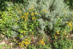 Le jardinage : une leçon de vie
