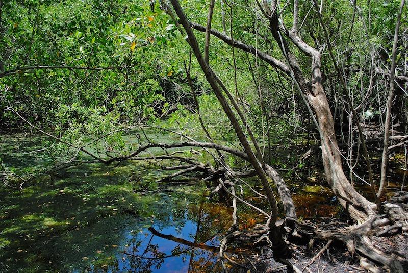Entre la terre et l'eau un espace de ressources pour soutenir la vie